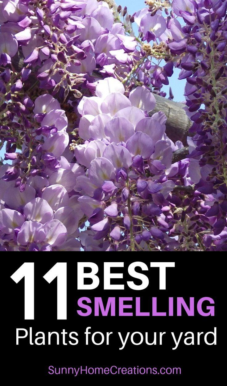 Am besten riechende Blumen, Büsche, Sträucher und Bäume für Ihren Hof