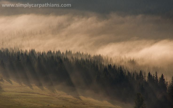 Forest in the morning light. Silesian Beskid, Poland