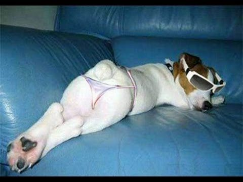 The World's Most Funny Dogs Videos 2013 - YouTube