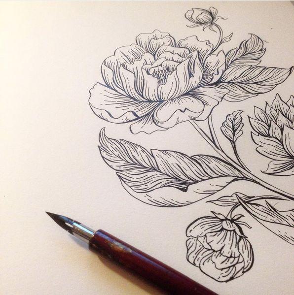 Best dip pen illustrations images on pinterest paint