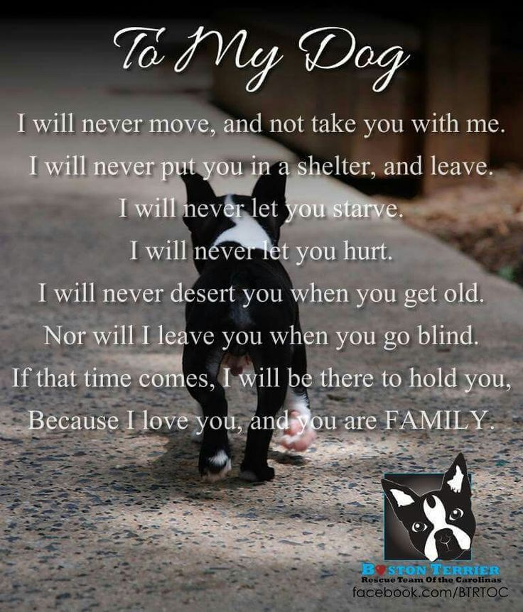 """Every dog remains a puppy. They only deserve a nest. Don't buy them. Don't leave them alone only because hasn't a stupid and insignificant """"pedigree"""". Adopt them. This means being human."""