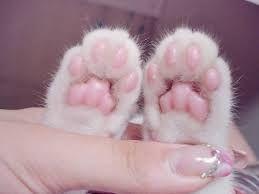 Výsledok vyhľadávania obrázkov pre dopyt cat paws
