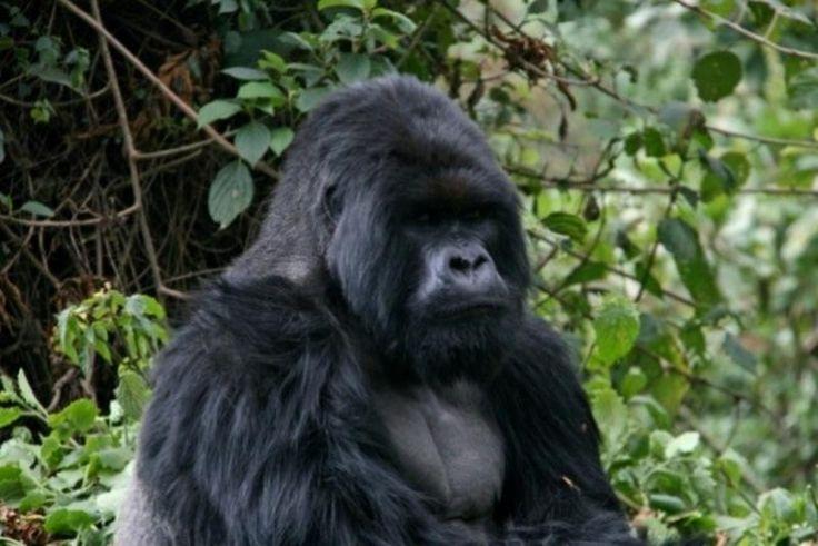 Uganda & Ruanda Rundreise : 16 Tage Erlebnisreise Uganda & Ruanda – Die unbändige Kraft der Natur
