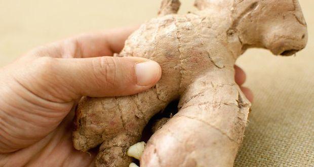 cultiver son gingembre à la maison