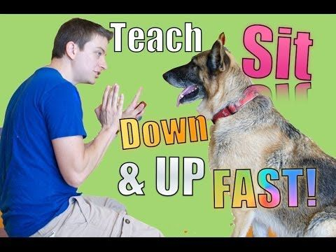 Teach These First: How To Teach Your Dog Sit, Down, Up And Stand