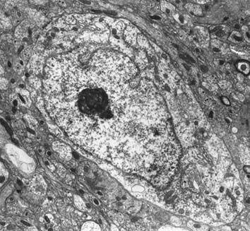 células reais vista de um microscopio optico - Pesquisa Google