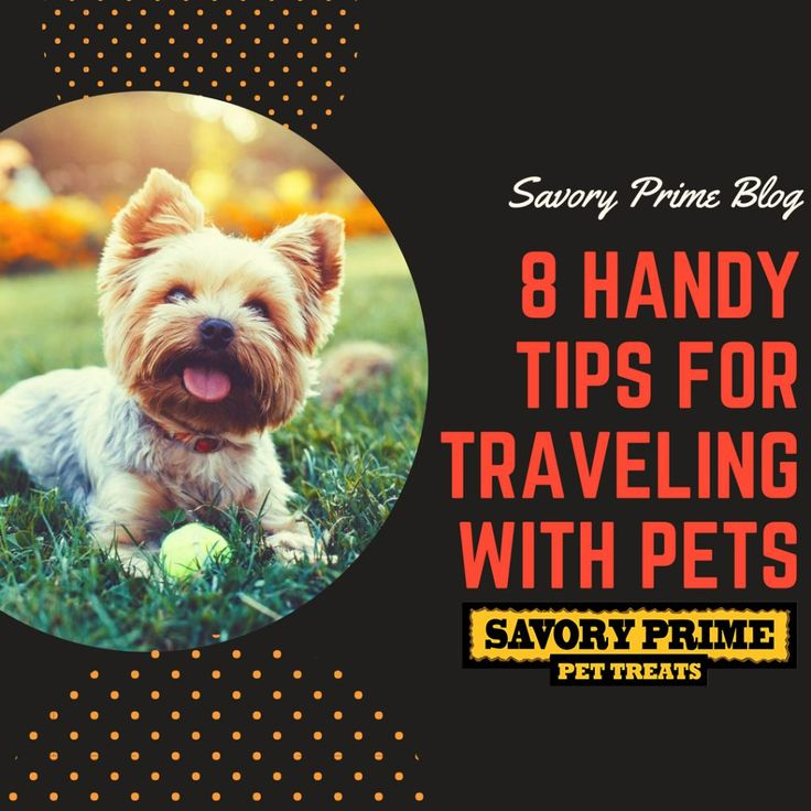 tips for pets pets Whether you're a dog-lover or a cat-cuddler, these tips for pet training, care, and craft-wear from the martha stewart show will keep your four-legged friends in tip-top shape.