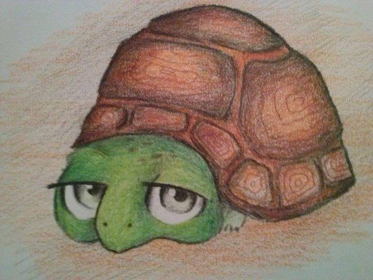 turtle- kopija