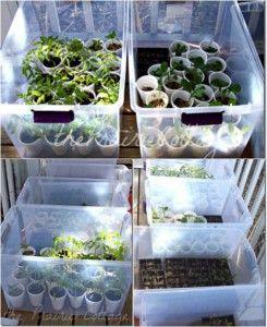 Use plastic bins as mini-greenhouses.