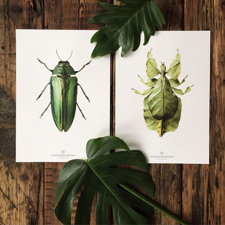 #hagedornhagen #artwork #backtonature The color of Nature  Our New Collection Beetles in beautiful company on a wooden wall. For more look at www.houseofbk.com