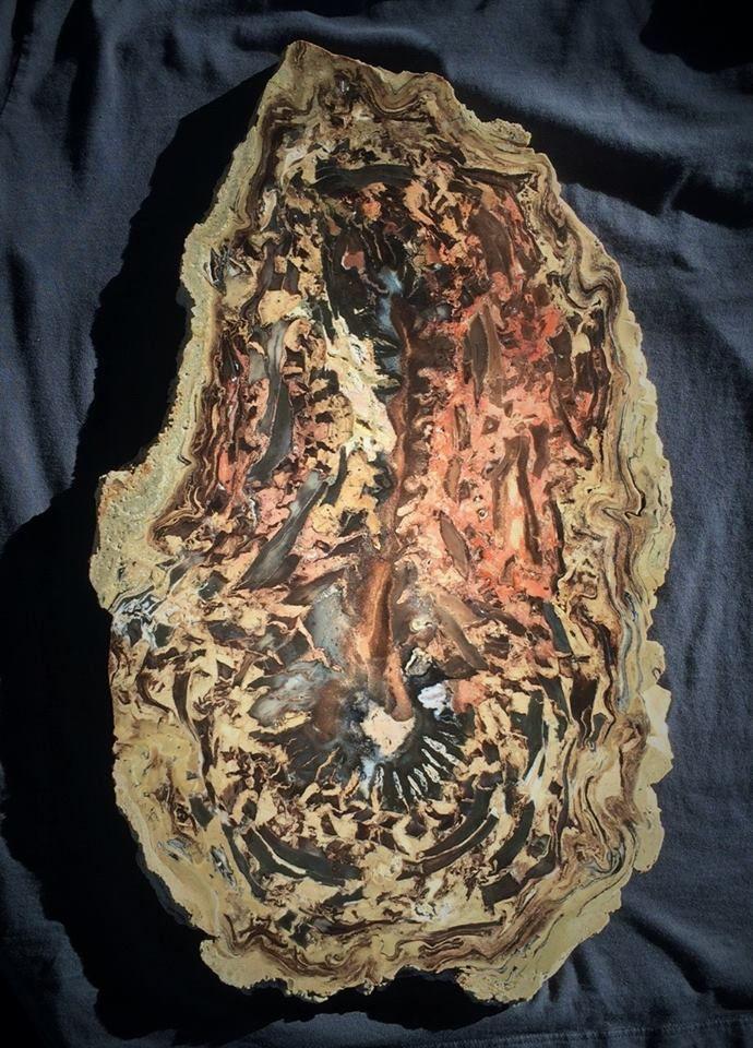 Very rare Petrified woodMonocot  Pandanus  Beaver Rim