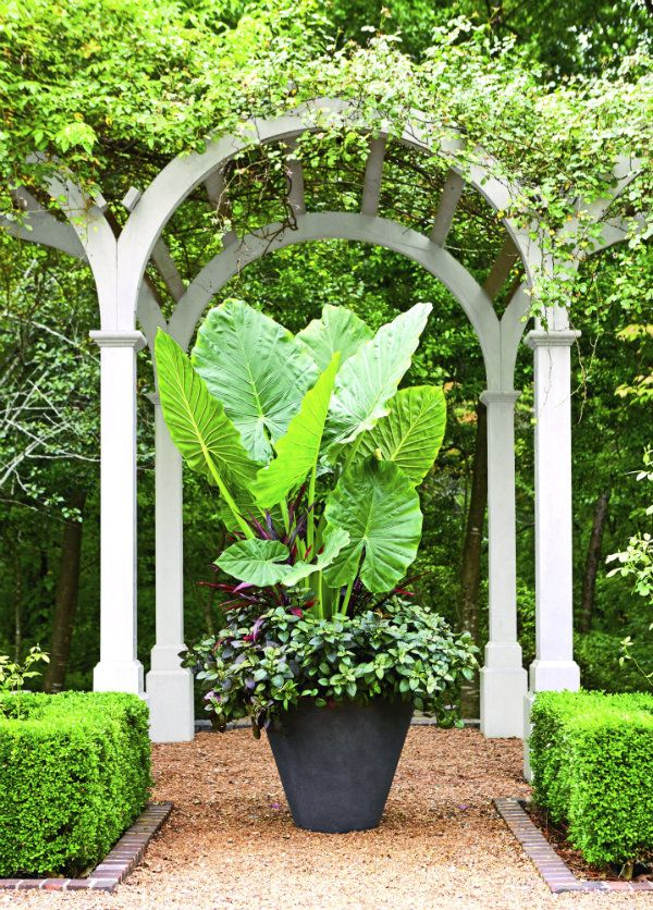 67 best images about container gardening on pinterest for Decor 718 container