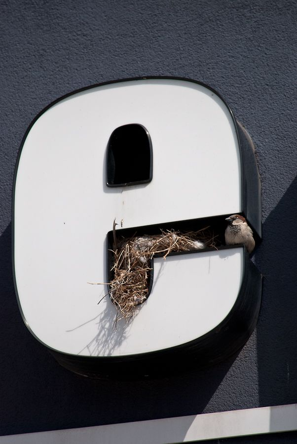 Bird Nest in Sign