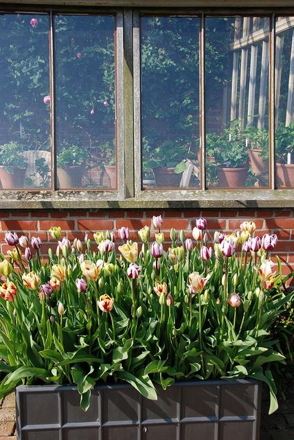 East Ruston Old Vicarage Garden by IanRuneckles, via Flickr