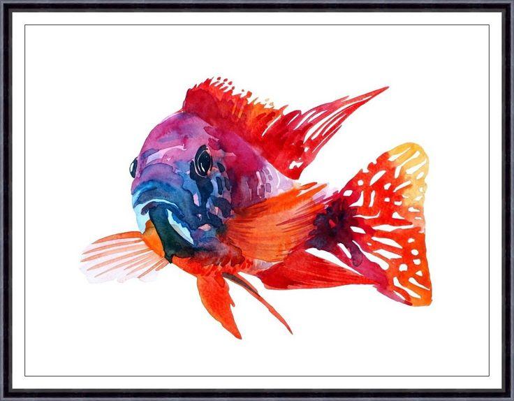 Red Cichlid Fish Art PrintORIGINAL Watercolor Fish