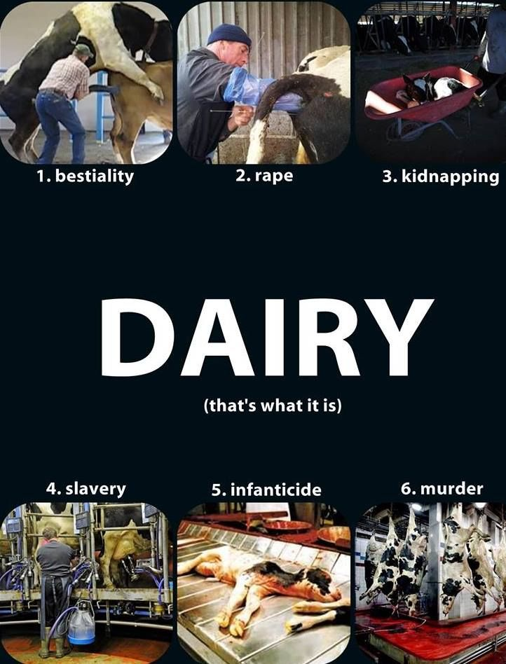 The truth about dairy... now can you still drink cow's milk or anything else that's dairy? I can't!