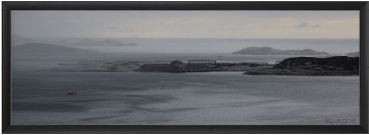 """""""OKSEN"""" POSTER 36""""x12"""" inches.(91x30cm) http://www.zazzle.com/oksen_poster-228058044272456207… … Photo by Roy M.Signed. Best framed. High quality paper. Sold by Zazzle. www.zazzle.com/oksen_poster-228058044272456207?rf=238901250819094787"""