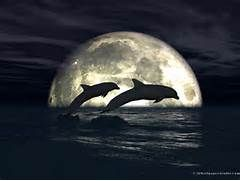 Moonlight dolphins wallpaper in 1024x768 screen resolution