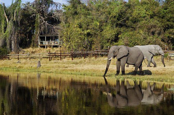 Elephants visiting the waterhole at Savute Safari Lodge