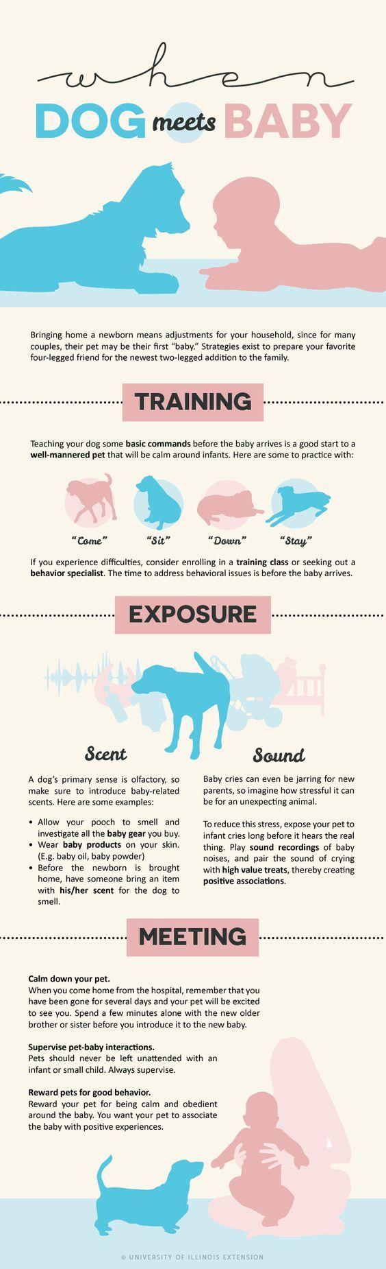 """When Dog Meets Baby"" infographic - tips and tricks for new parents! - Babies und Hunde an einander gewöhnen"
