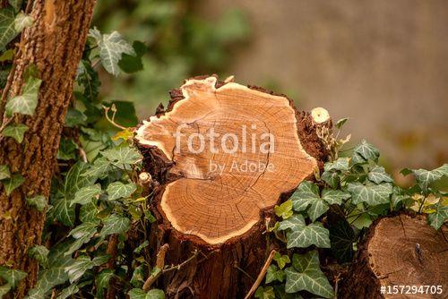 """Laden Sie das lizenzfreie Foto """"Baumstumpfgesicht"""" von Photocreatief zum günstigen Preis auf Fotolia.com herunter. Stöbern Sie in unserer Bilddatenbank und finden Sie schnell das perfekte Stockfoto für Ihr Marketing-Projekt!"""