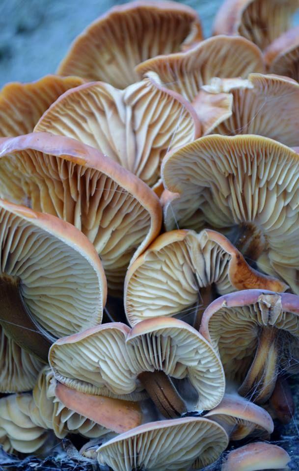 Fungus original photography by Lynda Moore (lynda_c_moore@msn.com)