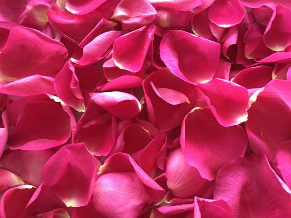 Dried Rose Petals From 6 Long Stem Dark Pink Roses lovely