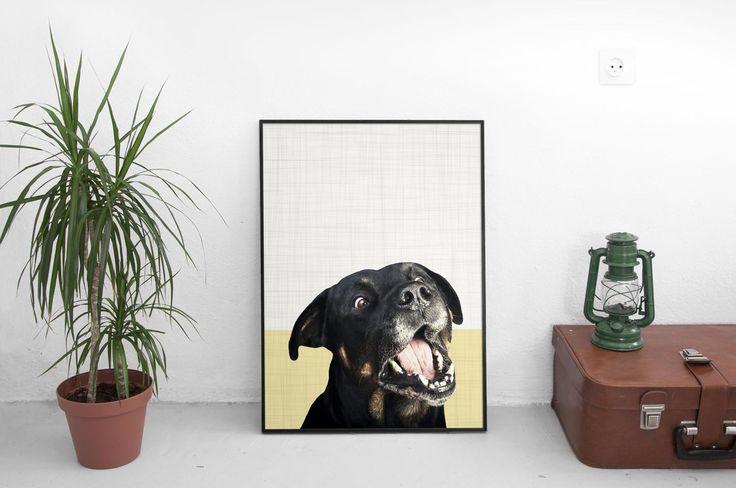Rottweiler, Dog Print, Dog Portrait, Animal Gift, Animal Print, Modern Prints, Printable Wall Art, Photography Prints, Pet Photography by SilBarragan on Etsy