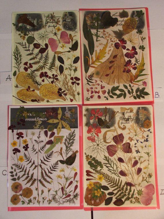 Pressed flowers dried flowers pressed leaves by DraculasGarden