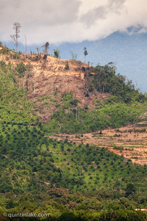 deforestation of the rainforest essay According to the world rainforest movement, twenty-five percent of our medicine comes from the forests short essay on deforestation in india.