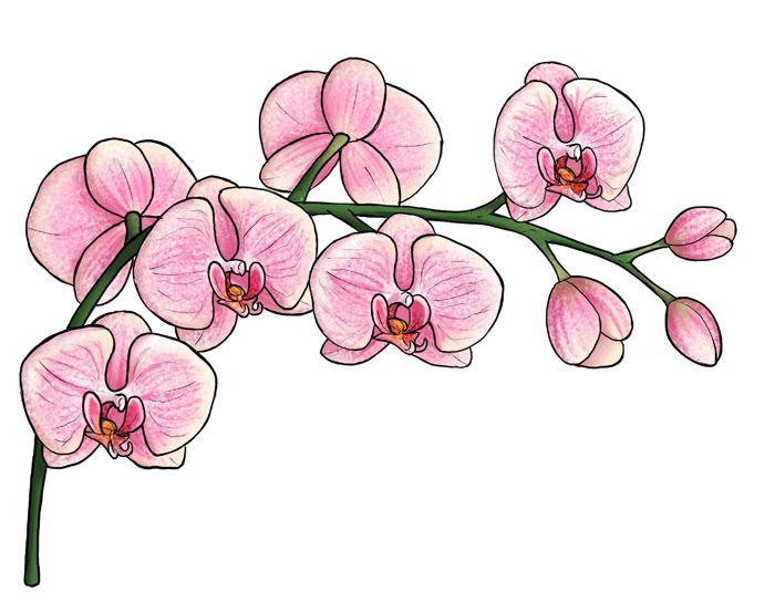 1001 Images De Dessin De Fleur Pour Apprendre A Dessiner Dessin Orchidee Dessin De Fleur Fleur Dessin Facile