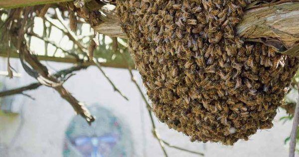 0d20c7a4c4a3999c6a14eb3e93160dc9 - How To Get Rid Of Bee Hive In Attic