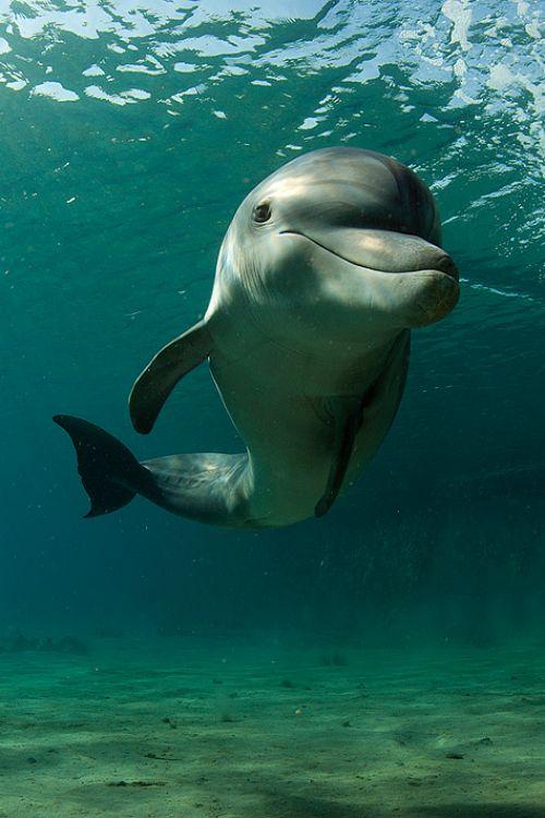 Fotografar: Golfinho                                                       …                                                                                                                                                     Mais