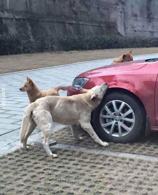Głodne psy! #głodne #psy