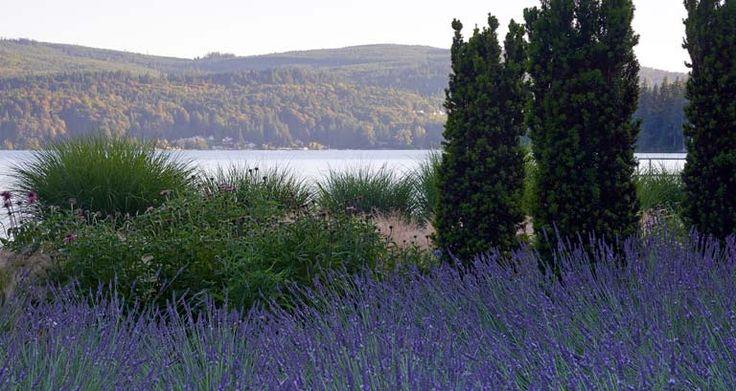 Озеро УОТКОМ   allworth дизайн • ландшафтные архитекторы