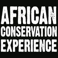 African Conservation Experience organise conservation volunteering placements and veterinary work experience opportunities for wildlife volunteers in southern Africa.