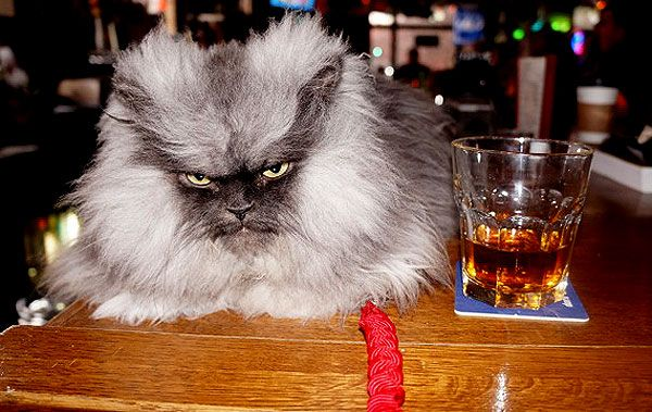too funny: Catster Interviews Colonel Meow -- and Emerges Unscathed
