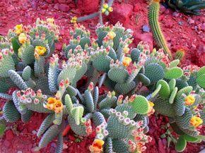 Am un cactus, cum il ingrijesc? Informatii utile despre ingrijire, intretinere, inmultire, udare,