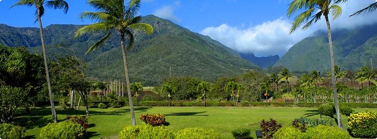 Coffees of Hawaii - Maui Plantation