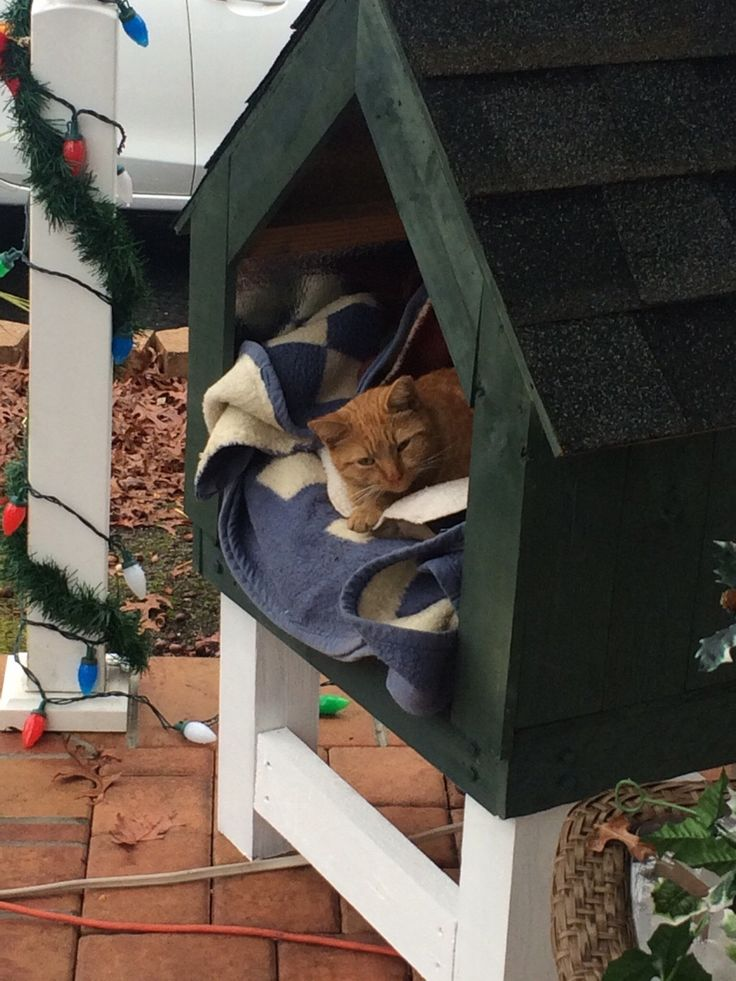 Homemade kitty house with weight activated heating pad. by Xray_Abby cats kitten catsonweb cute adorable funny sleepy animals nature kitty cutie ca