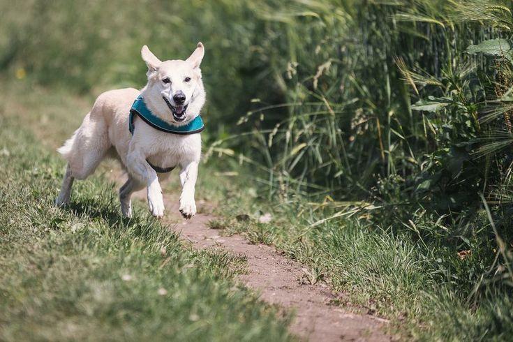 La canela es un excelente aliado para la salud de nuestros perros. ¡Mirad qué de propiedades les aporta!
