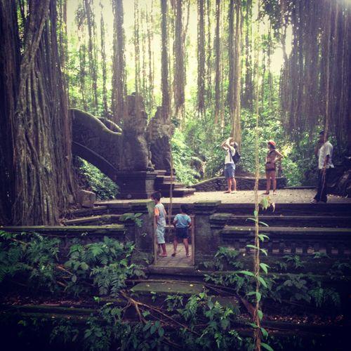 Bali.  Lovely shot inside Monkey Forest in Ubud.