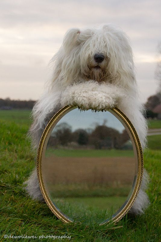 mirror mirror on the wal.....