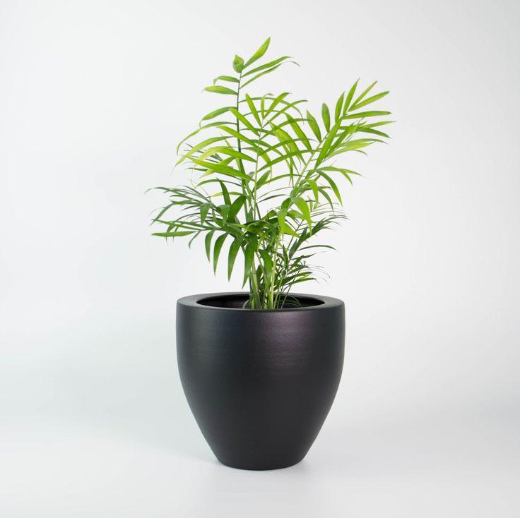 Elegant In Door House Plants