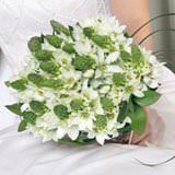 (DUO) Bridal Bouquet Star Of Bethlehem 28 Stems [Include Flower Food]