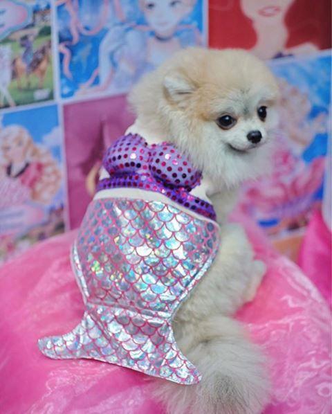 Dog wearing mermaid outfit! Mermaid cafe in Bangkok, Thailand