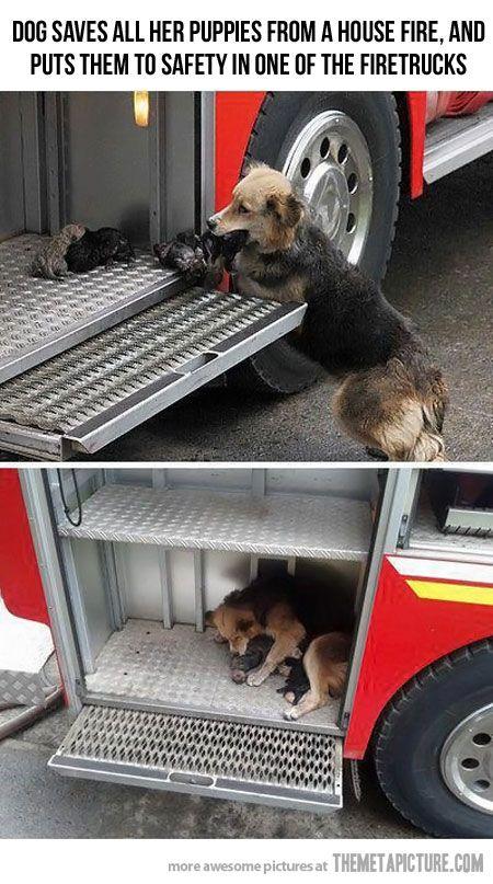 Hero mom…so sweet.: Houses, Puppies, Heroes, Sweet, Mothers, Dogs, Fire Trucks, Firetruck, Animal