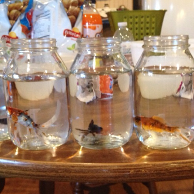 17 best images about mason jar christmas on pinterest for Fish in a jar