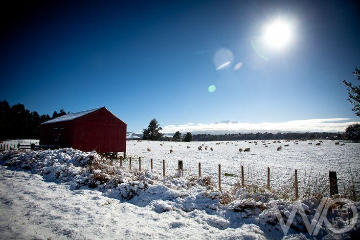 NZ snow