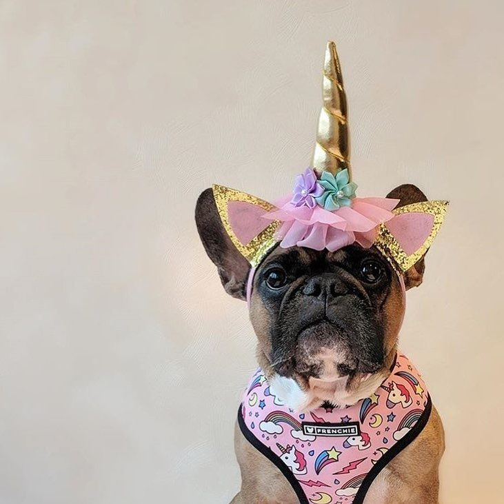 Frenchie What Frenchie I M A Unicorn Lily Glamour Lady